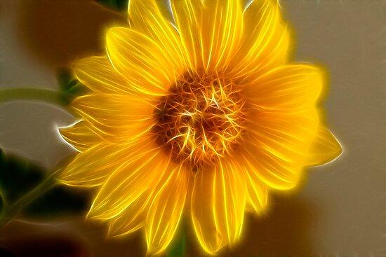 The Golden Glow Sunflower by Deborah  Benoit