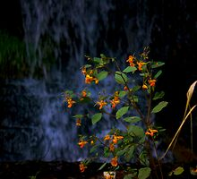 Flower in the Falls by Chintsala