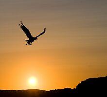 Eagle in sunset by Per E. Gunnarsen