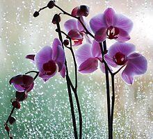 Rainy Windows by vanStaffs