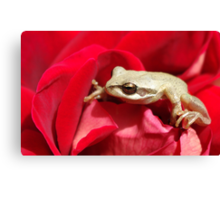 Frog in red Canvas Print