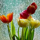 Tulips and Rain by vanStaffs