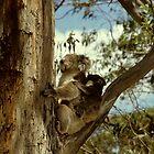 Australian Wildlife by solena432