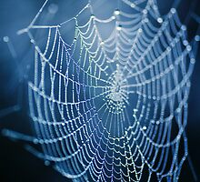 Wet Web by Andreas Stridsberg