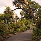 Royal Botanic Gardens by Leanne Nelson
