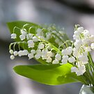 Lily of the valley by Mariann Rea