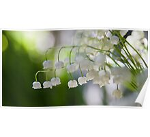 Lily of the valley panorama Poster