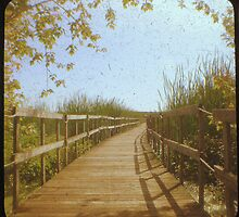 Boardwalk by gbrosseau