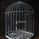 The Bird Cage by tank