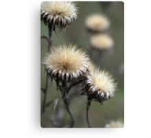 Trio ( from wild flowers collection)  Canvas Print
