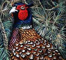 China's ringing neck Pheasant. by Robert David Gellion