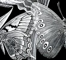 Butterfly Etchings by Susie Peek