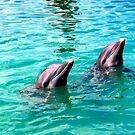 Pair of Dolphins by Dan Shiels