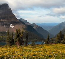 Bearhat Mountain and Hidden Lake - Glacier National Park by Dave Martsolf