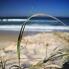 Corindi Beach, New South Wales by groophics