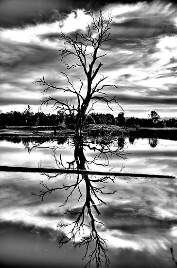 Meditation (Monochrome) - Wonga Wetlands , Albury NSW - The HDR Experience by Philip Johnson