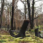Moss regenerating six months on by KellieJayne