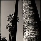 palms • woodland, ca • 2009 by lemsgarage