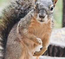 Squirrel Wink by Cindy Green