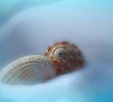 Soft shells by Linda Sannuti
