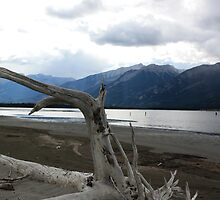 Driftwood by Alyce Taylor