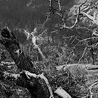 Yosemite Canyon by Rickster99