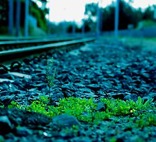 plants on train track by Adam Scarf