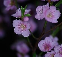 Hooray For Spring by laureenr