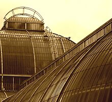 Palm House in Sepia by Wayne Gerard Trotman