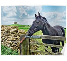 Friendly Neighbour ~ Abbotsbury, Dorset Poster