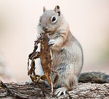 Uintah Chipmunk by peterwey