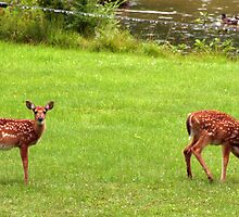 Twins on a Rainy Day  by Peggy Berger