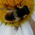 Bumble Bee by MaeBelle