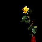A Rose for YOU:-) by DonDavisUK