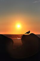 watching the sun go down by Jeannie Peters