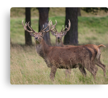 Stag Night Canvas Print