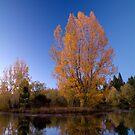 Autumn splendour 2 by Paul Mercer