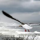 dreams take flight by gabryshak