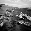 driftwood beach by Martin Pickard