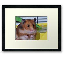 The Hamster Framed Print