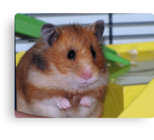 The Hamster Canvas Print