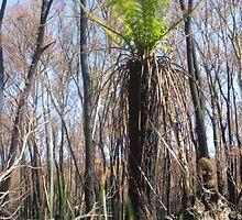 Sarah's Bushfire rejuvenation image 2 by sarahmacsmiles