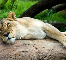 Lazing On A Sunny Afternoon by Sue Martin