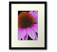 Rainbow Cone Flower Framed Print