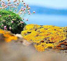 MIniature Landscape in Orange by ally mcerlaine