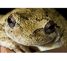 Happy Frog Photographic Print
