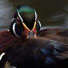 Sitting duck by richardseah
