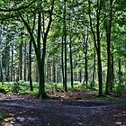 Bacton Woods Norfolk UK by Mark Snelling