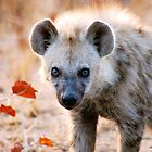 YEAH, I AM WATCHING YOU! - Spotted Hyaena - Crocuta crocuta by Magaret Meintjes