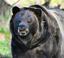 Grizzly Smile by Rhonda R Clements